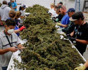 cannabis investing, cannabis investment, investing in cannabis market, cannabis investors, how to invest in marijuana, investing in marijuana, top marijuanas penny stocks 2017, marijuana stocks to buy, marijuana penny stocks, medical marijuana inc stock, marijuana stocks, cannabis stocks to invest in, marijuana investments, invest in marijuana, weed penny stocks, marijuana stock list, best marijuana companies to invest in, medical marijuana investments, cannabis stocks, best marijuana penny stocks