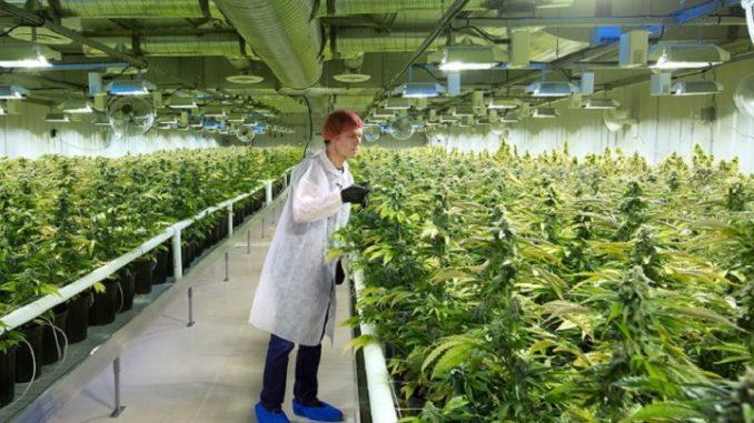 Best Marijuana Stocks News & Investments are on MarijuanaStocks.com