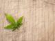 Recreational cannabis